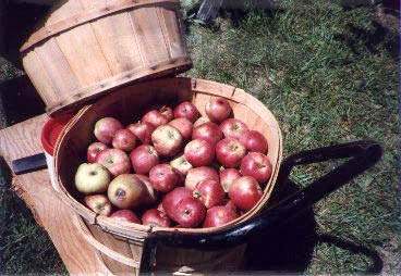 apples in baskets